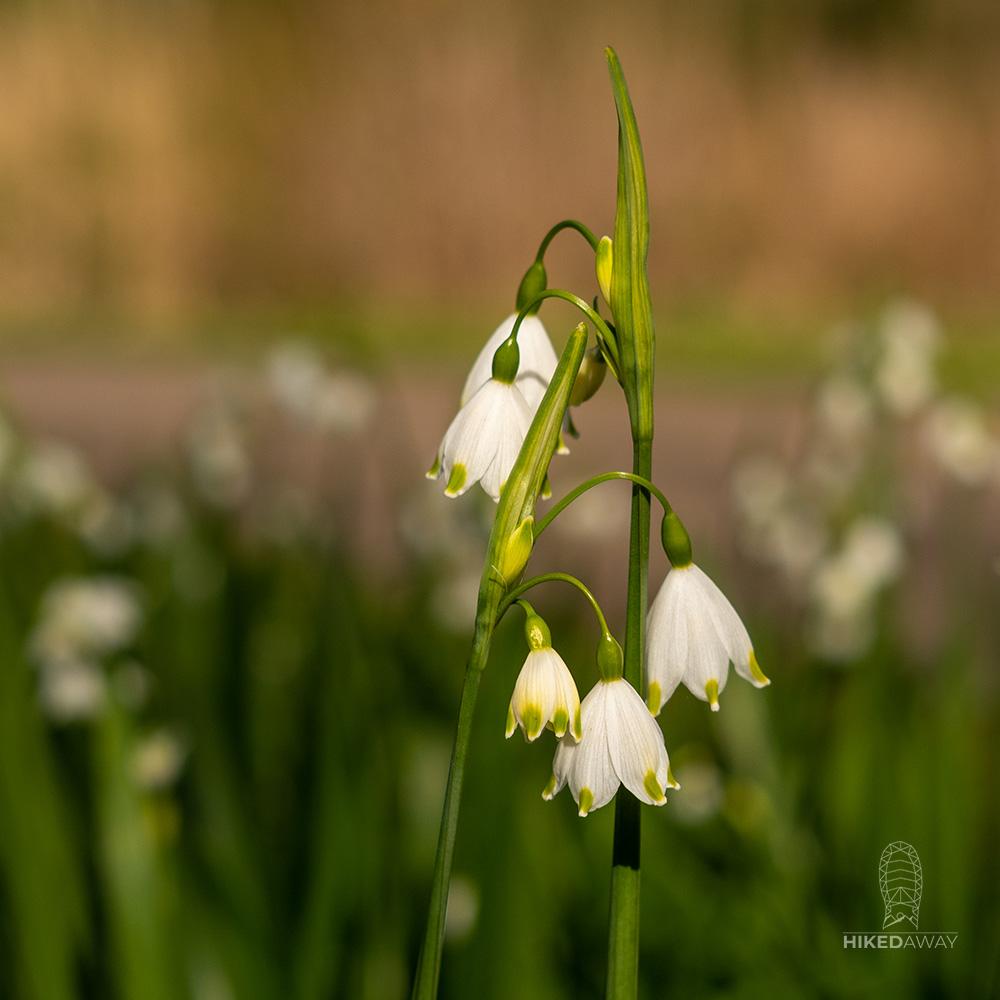 Een van de vele bloemen langs de Gaasperplas