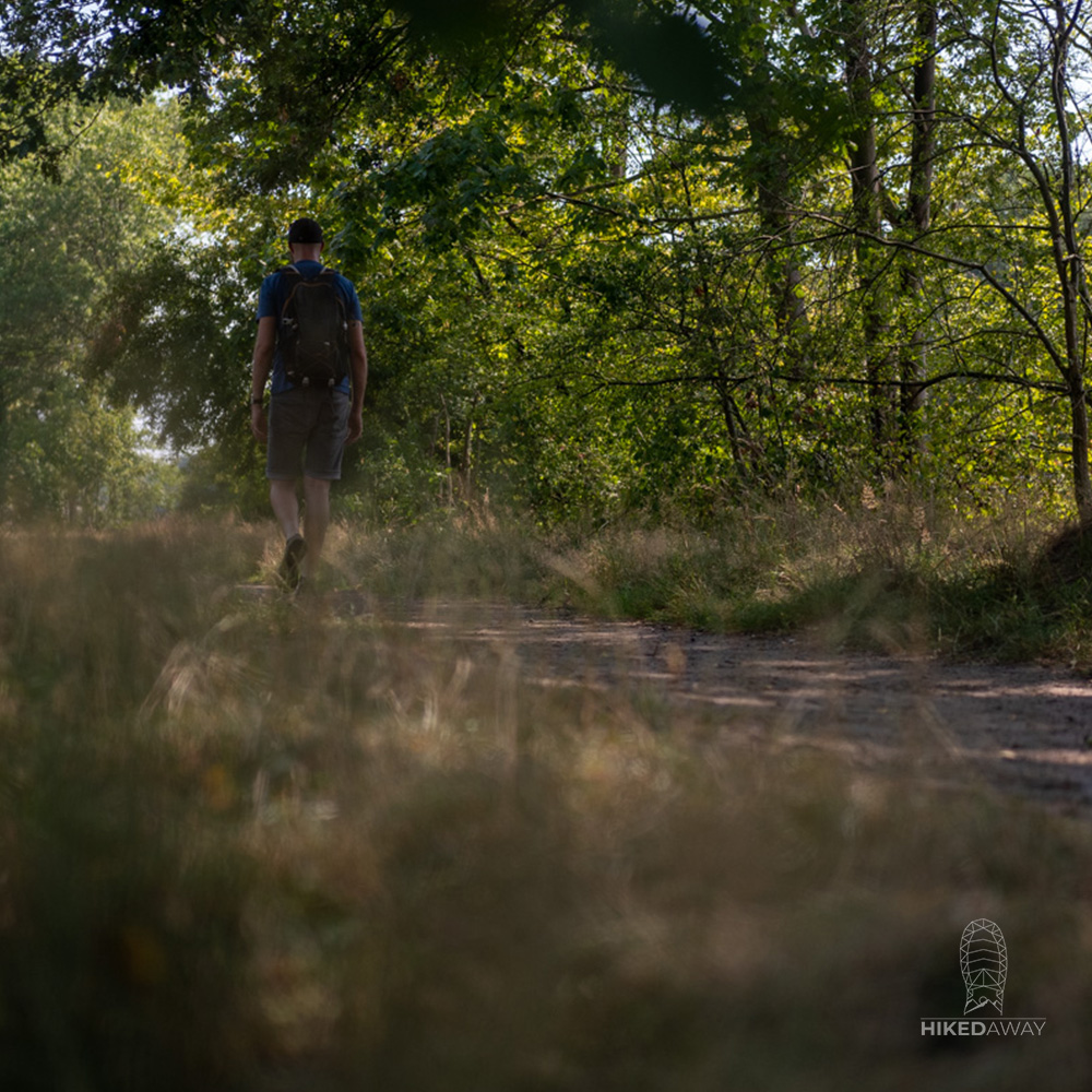 Walking through the forest on Westerborkpad