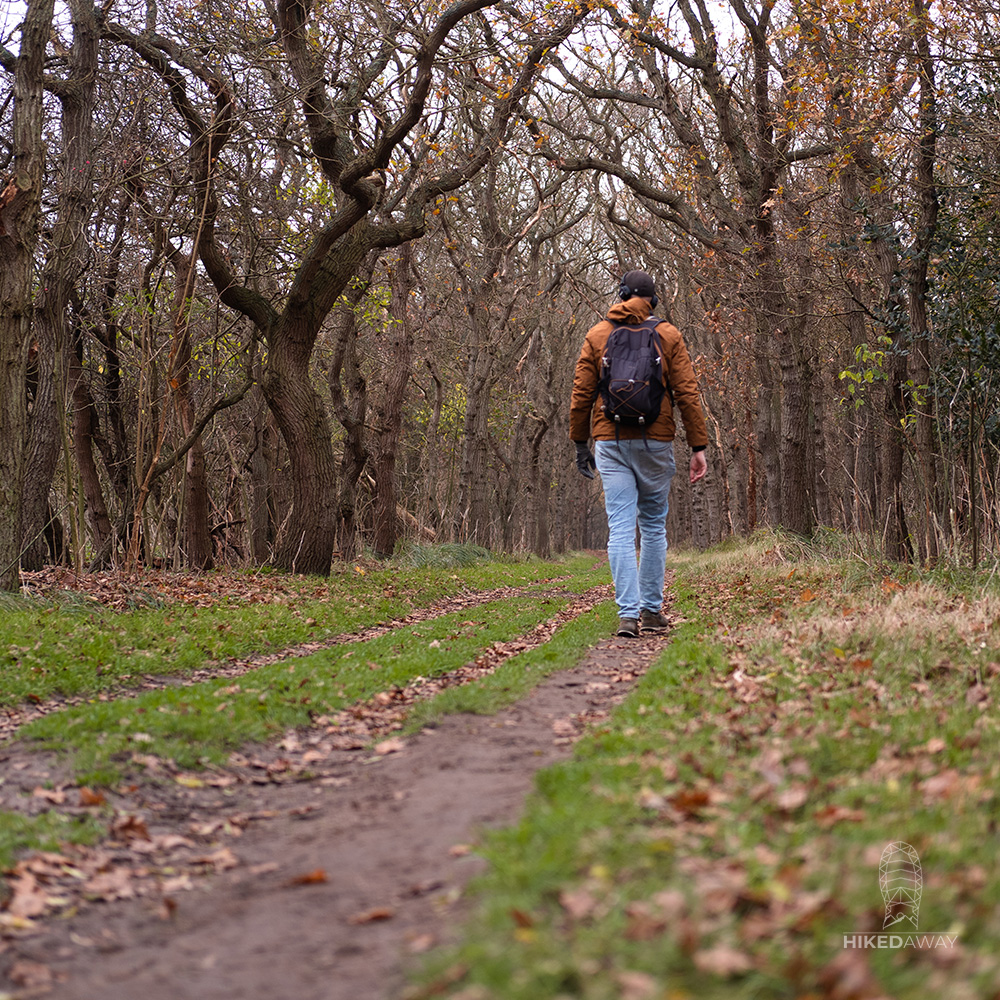 De bossen rondom Castricum